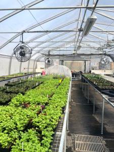 Serre et ses plantes potagères